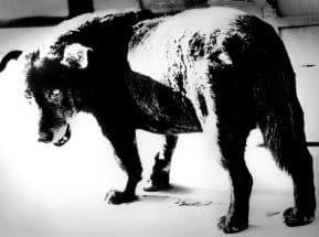 森山大道「三沢の犬」