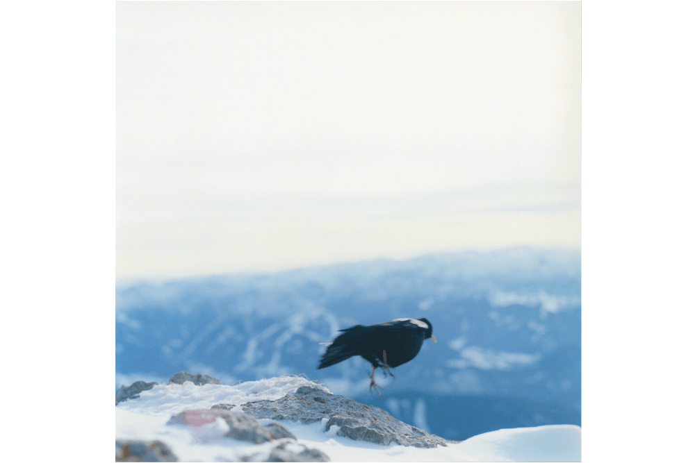 「Untitled, from the series of