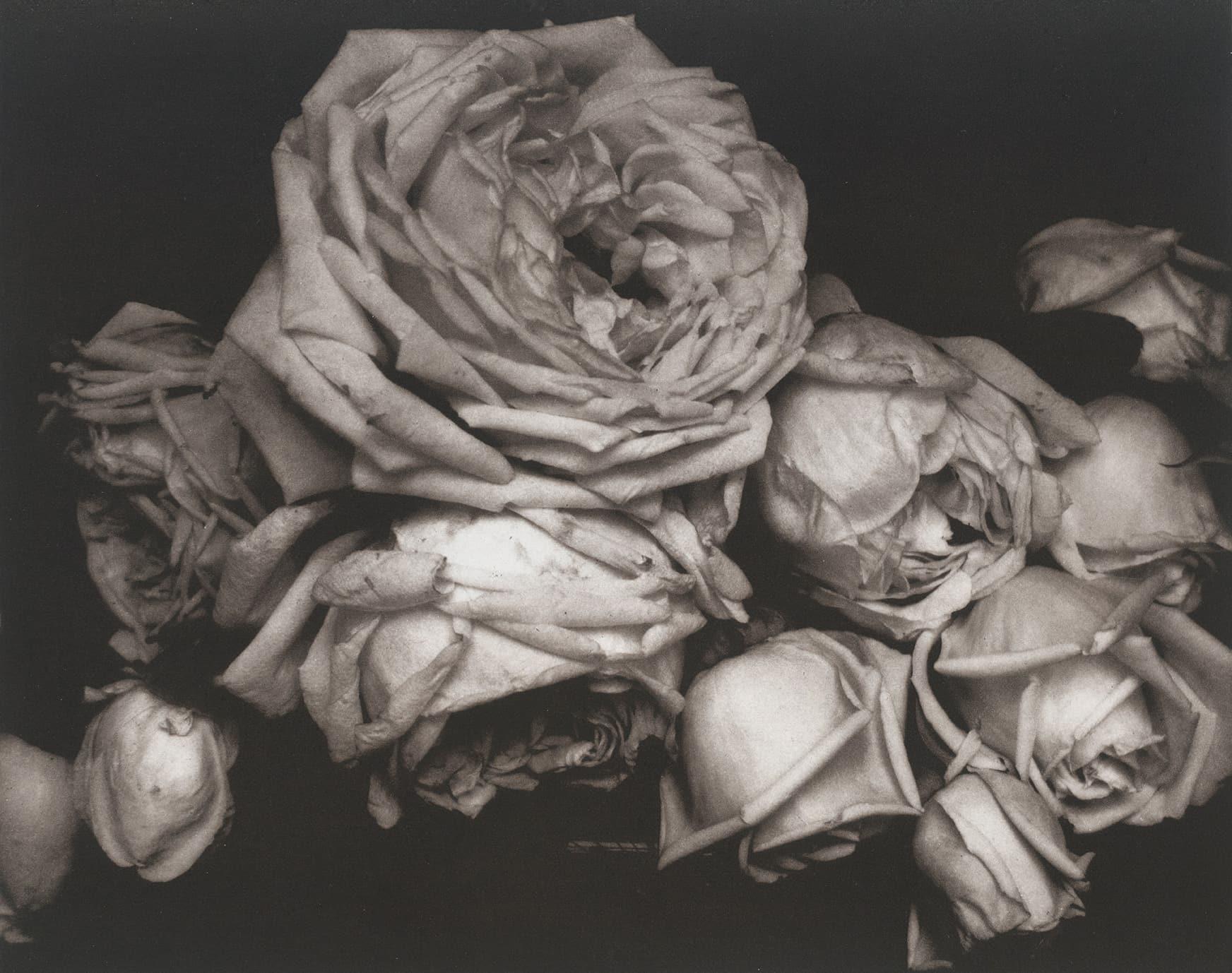 エドワード・スタイケン Heavy Roses