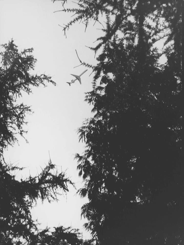 《飛行機と裸子植物の森林》2013年