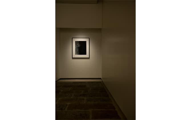 Art Photography for Interior Design
