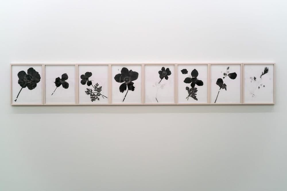 The Politics of Flowers