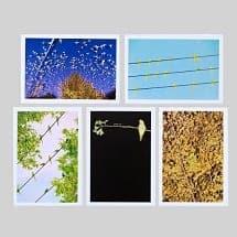 水谷吉法 ポストカードセット 水谷吉法 / TOKYO PARROTS