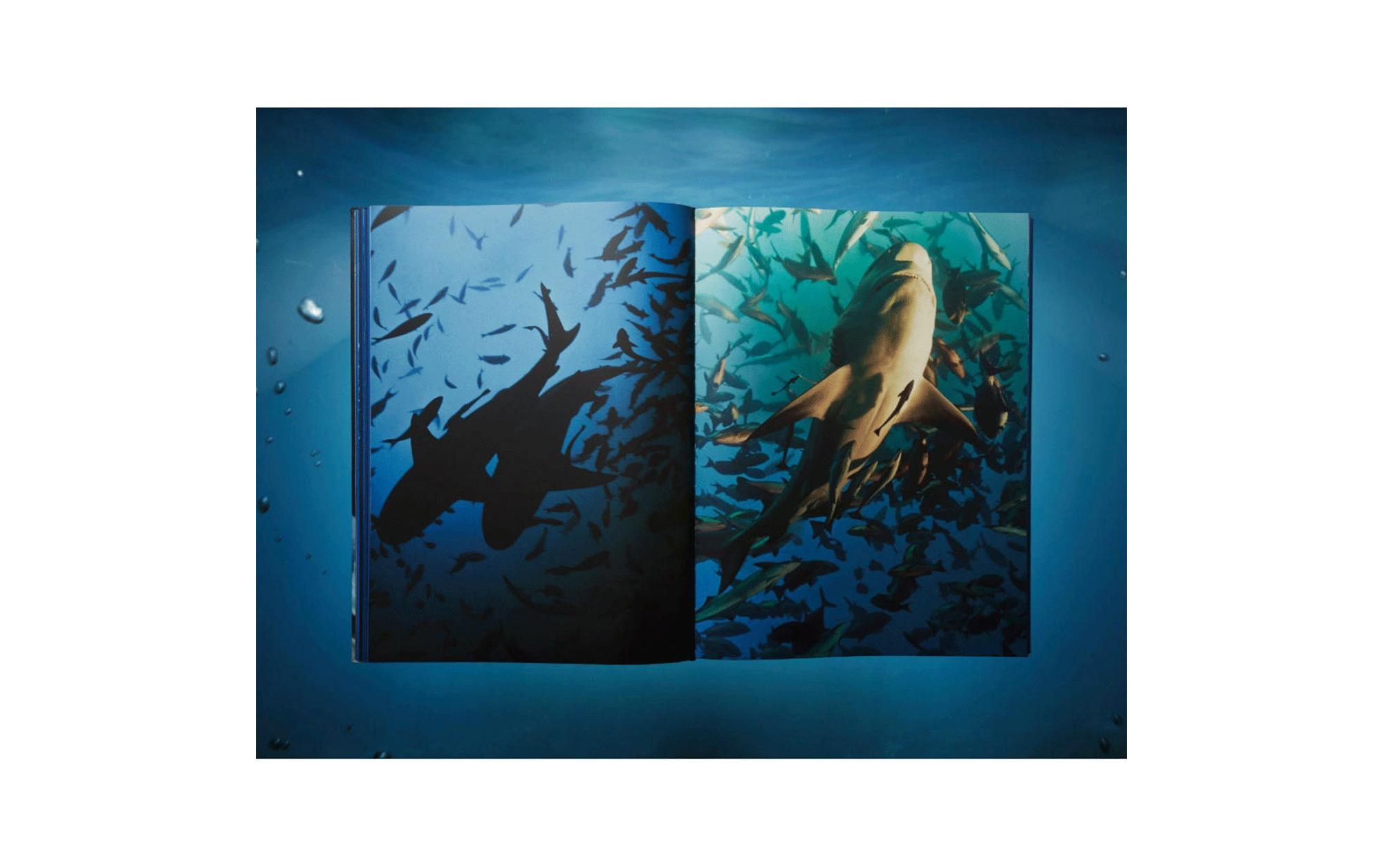 SHARKS XXL