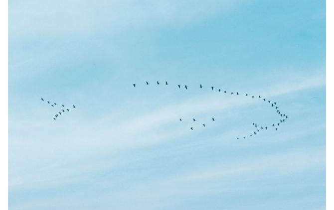 野口里佳「A Town of the Birds #4」2015年